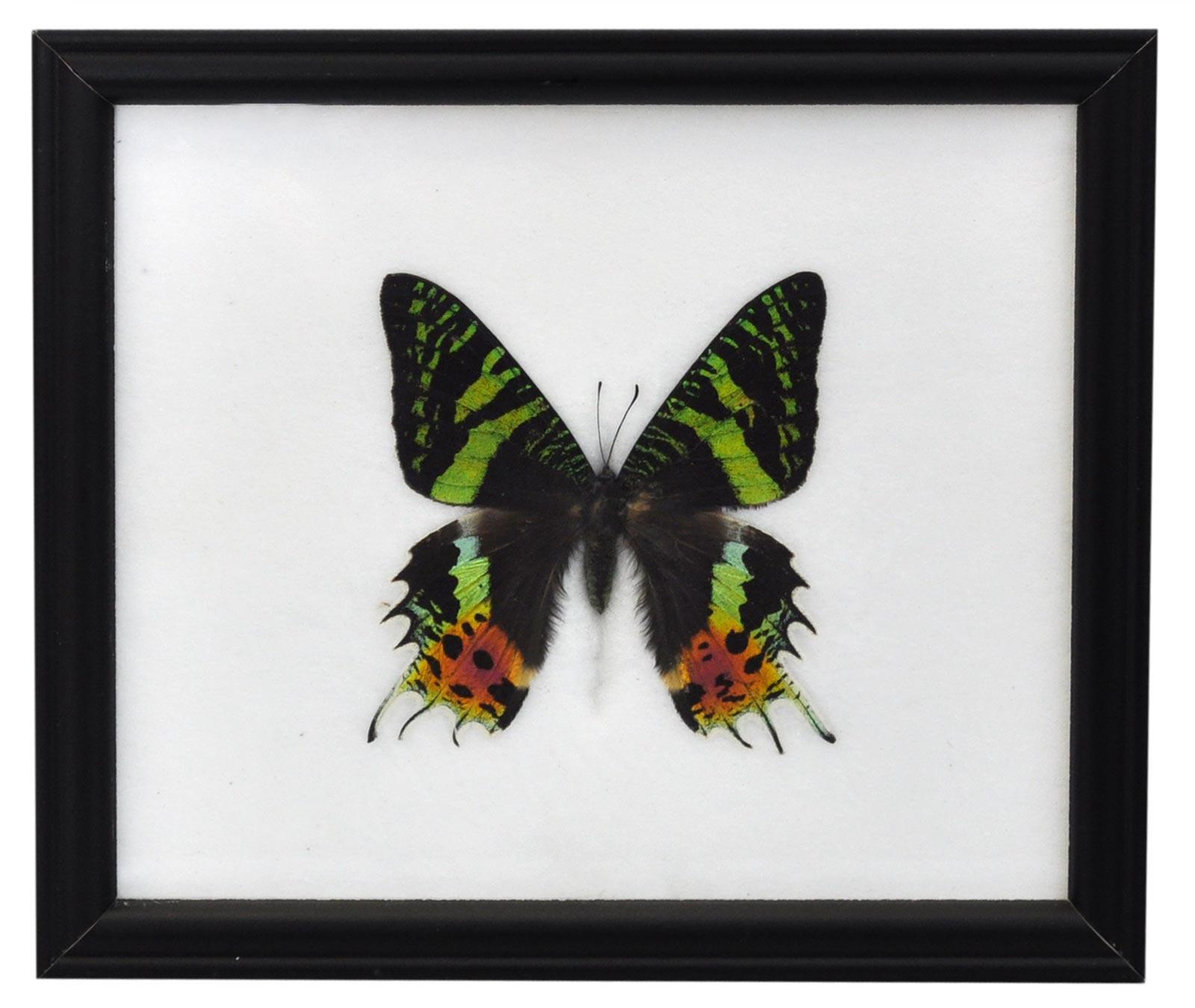 Insektenschaukästen