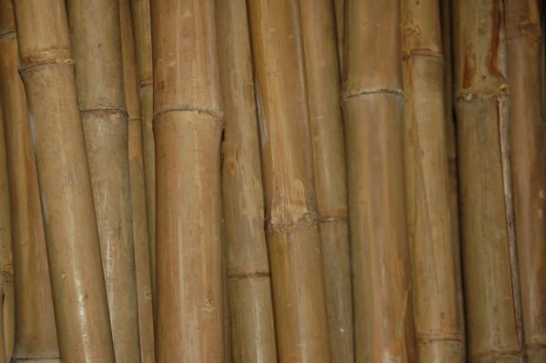 Bambusstangen bis 9 m Länge / Meterpreis