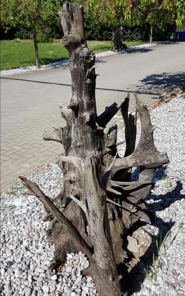 Tropenholz Wurzel