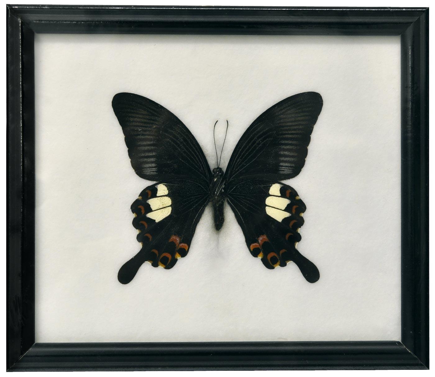 Nett Schmetterling Bilderrahmen Bilder - Rahmen Ideen ...